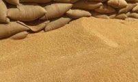 المجلس الحكومي يصادق على مرسوم يلغي رسم الاستيراد المفروض على القمح اللين ومشتقاته….