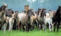 لماذا ستقوم أميركا بإعدام 45 ألف حصان؟