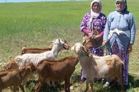 دور المرأة الفلاحة في التنميه المجالية القروية. ورهان النموذج التنموي الجديد للمملكة المغربية (تتمه)