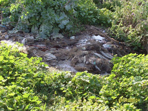 تلويث البيئة ببني شيكر ضواحي الناظور (21)