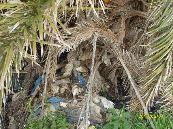 تلويث البيئة ببني شيكر ضواحي الناظور (31)