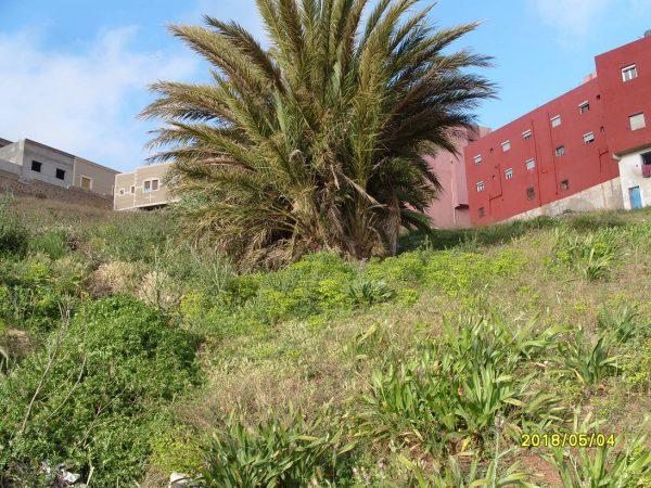 تلويث البيئة ببني شيكر ضواحي الناظور (40)