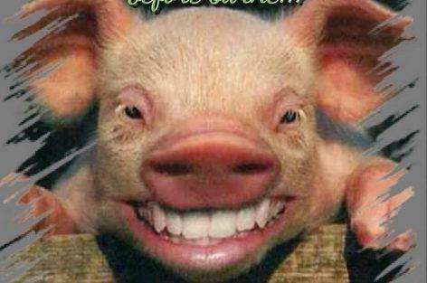 حين يكون للخنازير شأن بفرخانة فاعلم أن الفتنة قادمة