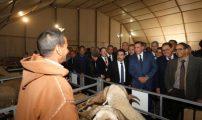 وزير الفلاحة يفتتح فعاليات الدورة الثانية للمعرض الوطني المهني للصردي بسطات…