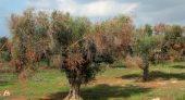 """""""أونسا"""" يحذر من بكتيريا سريعة الانتشار تفتك بأشجار الزيتون"""
