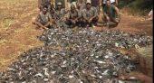 الثروة الحيوانية بالمغرب مهددة بالانقراض بفعل القنص الجائر