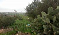الطبيعة من جبل بني سيدال