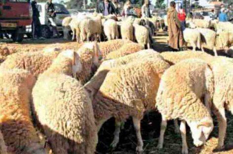 """حزب مغربي """"يفتي"""" بإلغاء العيد الكبير"""